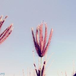 warm nature flower