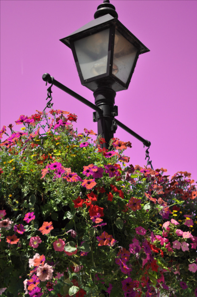 #colorswap #flowers #colorful #sky