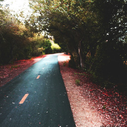 colorswap colorful photography nature fall warm road landscape faraway nobody