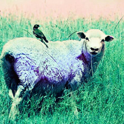 colorswap nature petsandanimals sheep bird