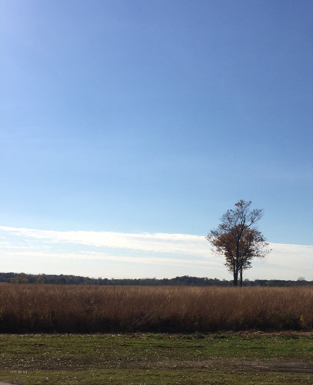 #fields #landscape #illinois #photo
