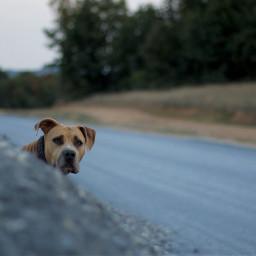 dog interesting pets art hund