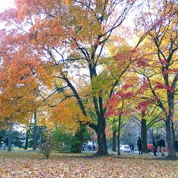 japan hokkaido sapporo hokkaidouniversity autumn