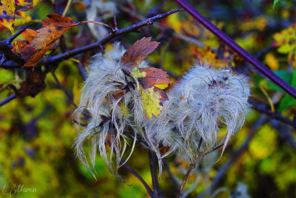 #plant #leaf #autmn #fall  #nature #photography