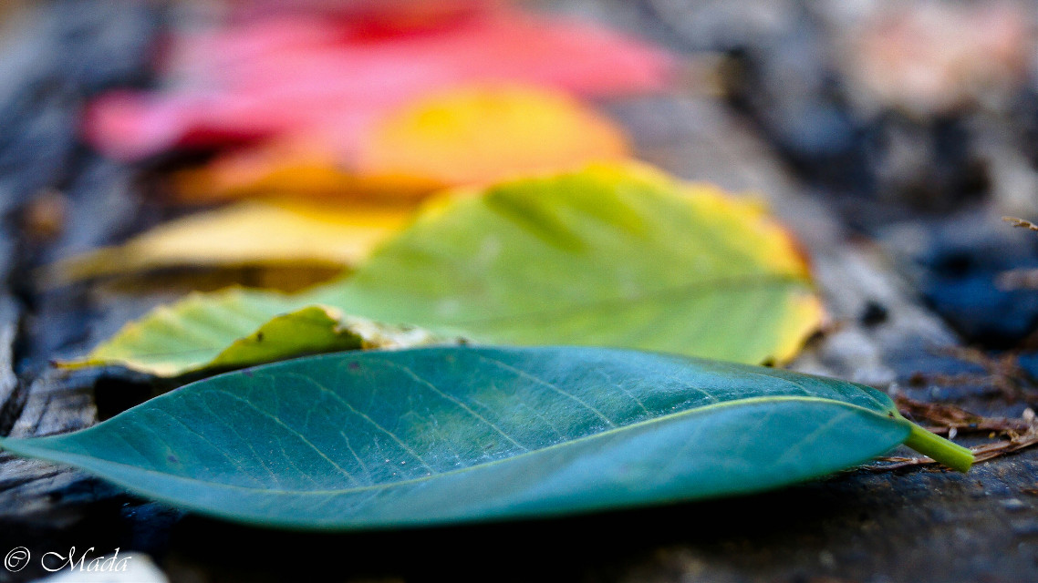 #nature #beautiful #wild #leaves #followme #perspective #fall #photography #colorful