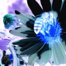 photography freetoedit edited flower mobilephotograph