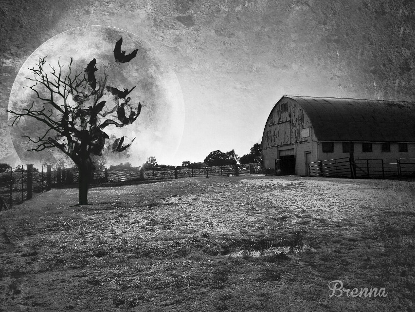 I hope everyone had a fun and spooky Halloween! #dark #Halloween #blackandwhite #farm #surreal
