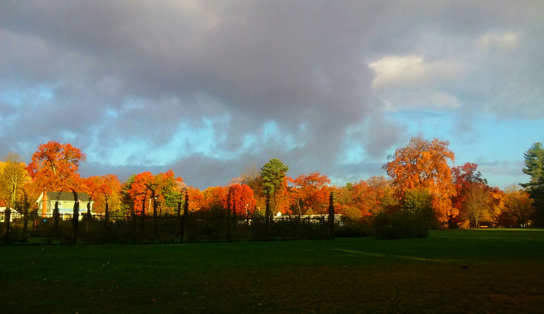 #Sunrise shinning over the #garden Elizabeth Park #Autumn #colorful #trees #Featured #interesting