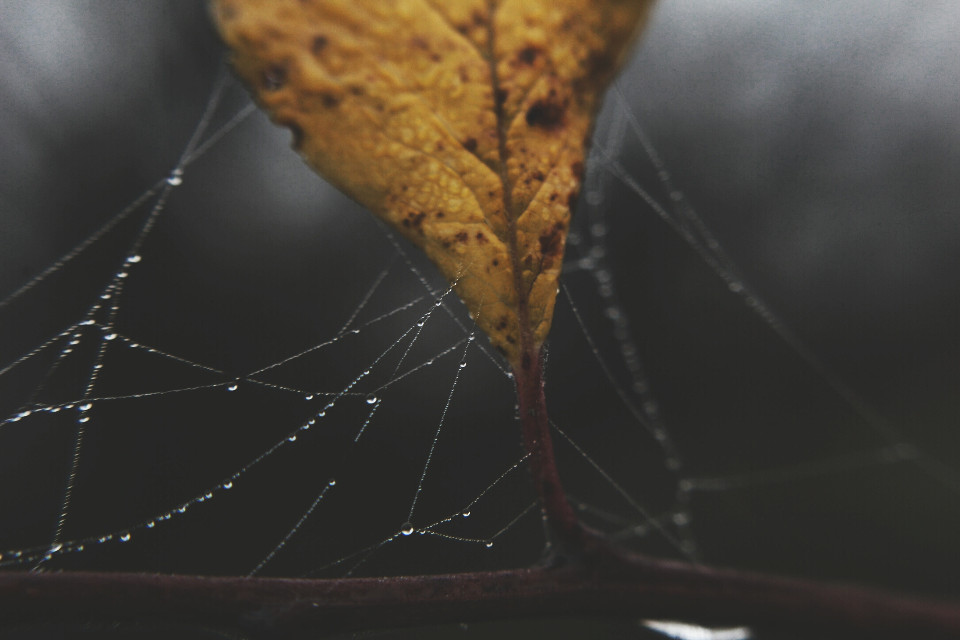 #nature #spiderweb #autumn #outandabout #closeup #photography