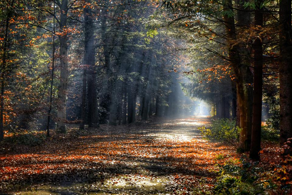 #hdr #herbst #verlassene orte #lostplace #Natur