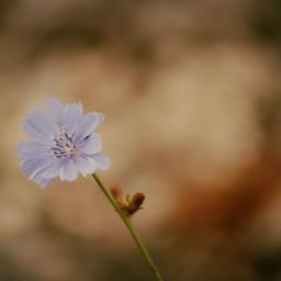 blue offcenter bokeh NegativeSpace bloom blossom macro closeup photography artistic pretty