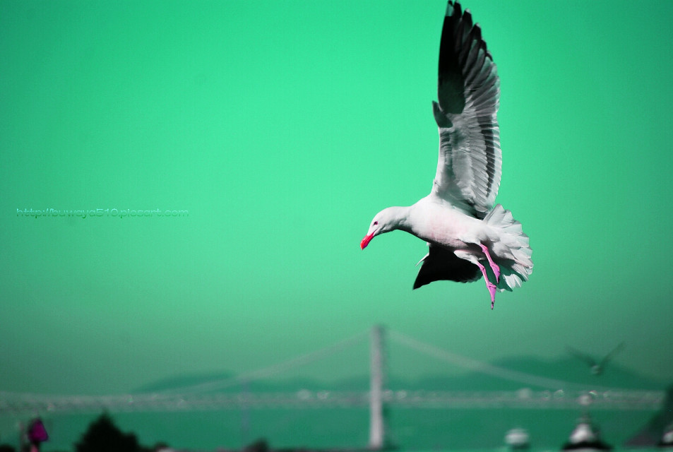 #photography #seagull #fly #action