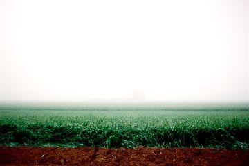 nature fog farm