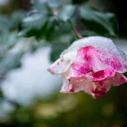 colorful cute nature photography snow