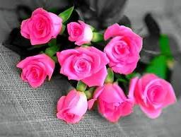 flower colorsplash nature