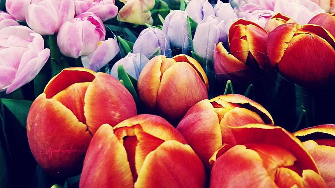 #colorful #flower #seasons #photography #flowerarrangement #hellospring