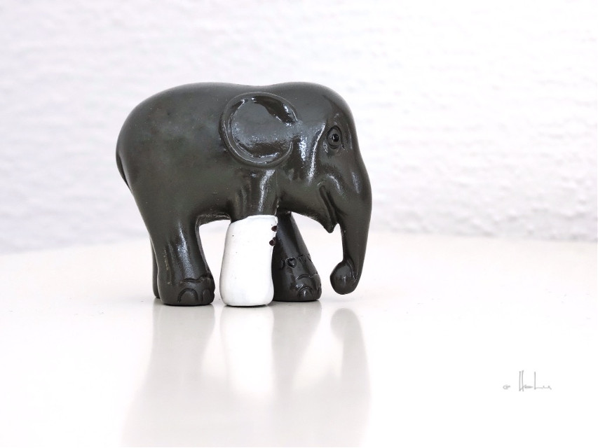 #closeup #elephant #photography