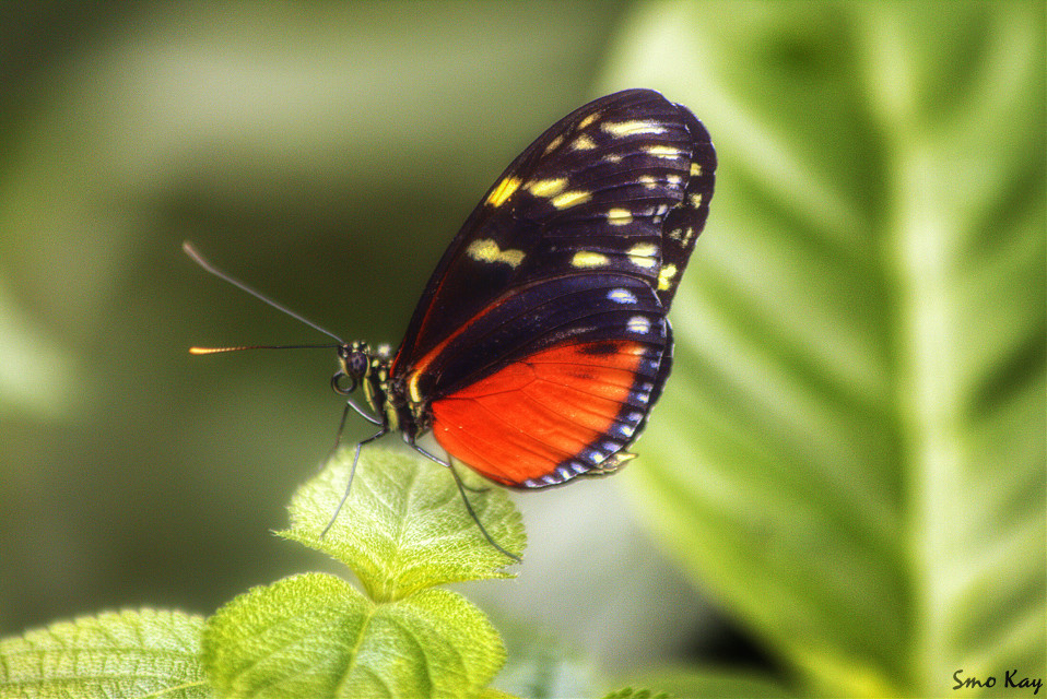 #petsandanimals #photography #animals #nature #zoo #butterfly