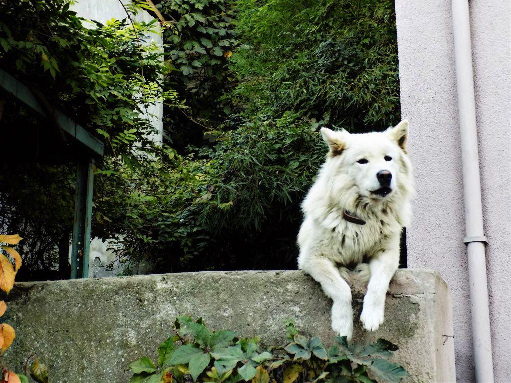 İyi geceler ☺️😎   #dog #animal #cute #nature #goodnight #night #interesting #art #photography #freetoedit #nikon #picart #emotion #istanbul