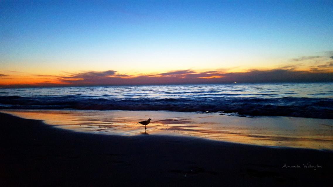 #wppfallcolors #contrast #fall #beach