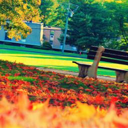 fall parkmemories seasons autumn dpcbenches pccollegecampus pcdayout pccozycorner pctwocolors pcbench pcsecretspotsinmycity pcphotooftheday pcbeautifuldays pcthebestplace pctimelessmemories pcdaylight pccolorsofnature