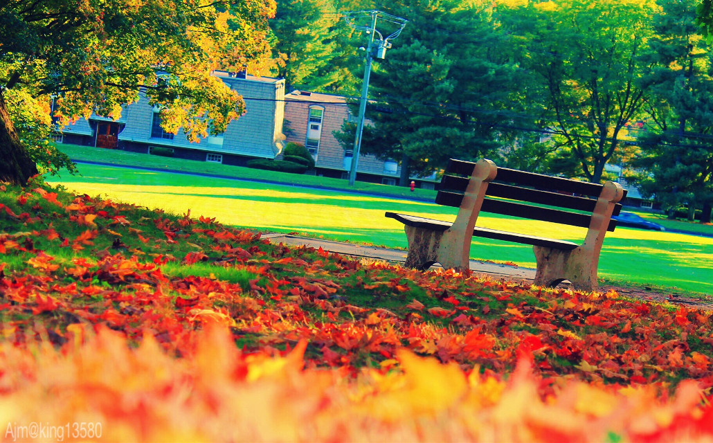 #fall #parkMemories are special, it reminds us,When we laugh by remembering the days we cried,And now we cry by remembering the days we laughed. #seasons #autumn #dpcbenches #pccollegecampus #pcdayout #pccozycorner #pctwocolors #pcbench #pcsecretspotsinmycity #pcphotooftheday #pcbeautifuldays #pcthebestplace #pctimelessmemories #pcdaylight #pccolorsofnature