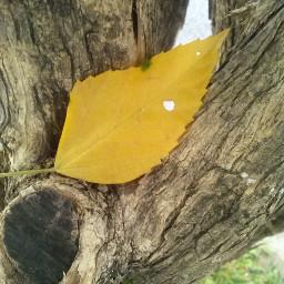 fall wppfallcolors yellow leaf