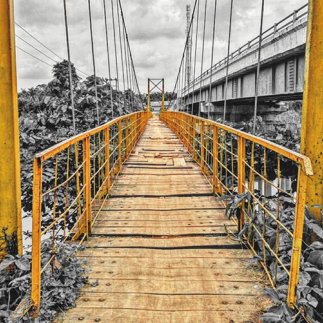 #colorsplash #yellow #nature #bridge