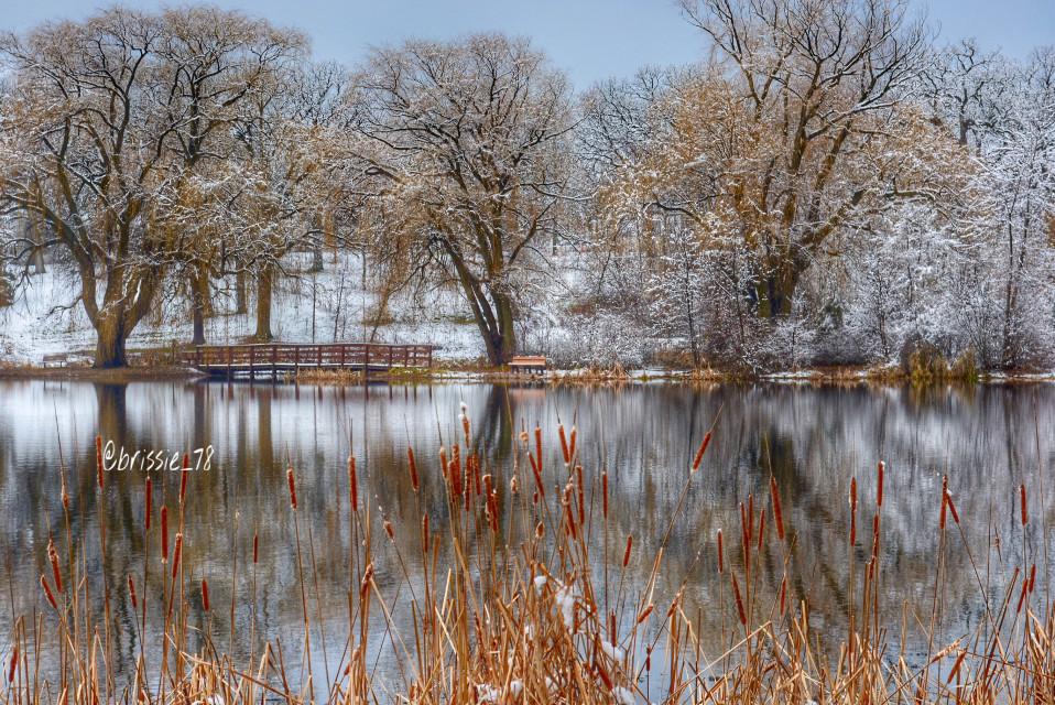 Winter Land!!✨🌾❄️ #winter #winterlandscape #landscape #reflections #trees #peaceful #nature #snow