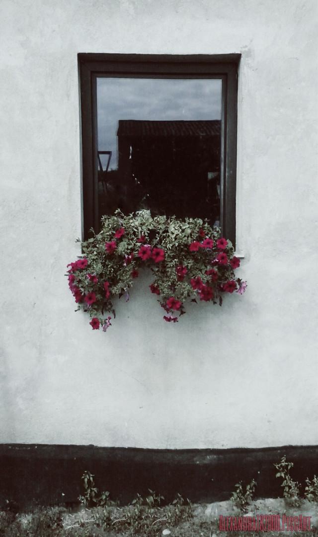 #flower  #window
