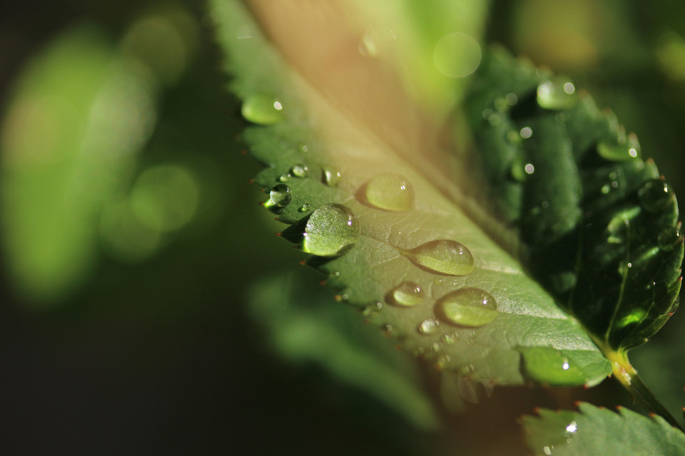 #japan #raindrops #drops #macro #canon #nature
