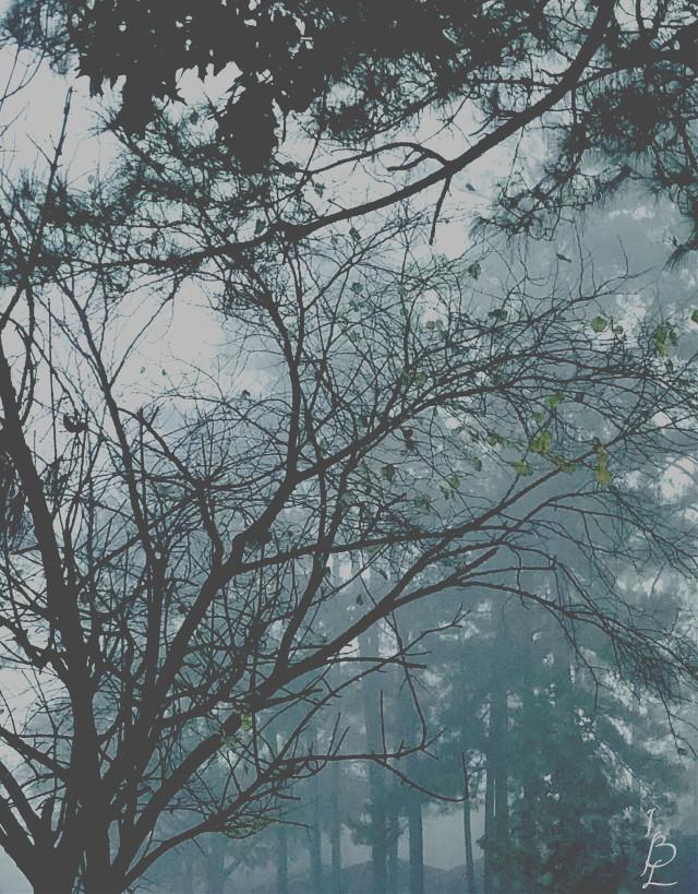 #mystery  #photography  #nature  #myshot  #fog  #trees  #outdoors