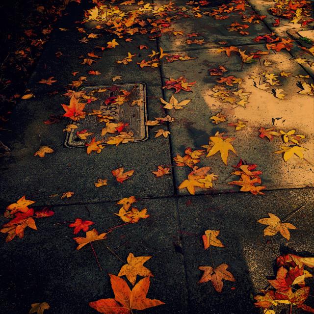 A #fall path way home #art #california #nature #photography