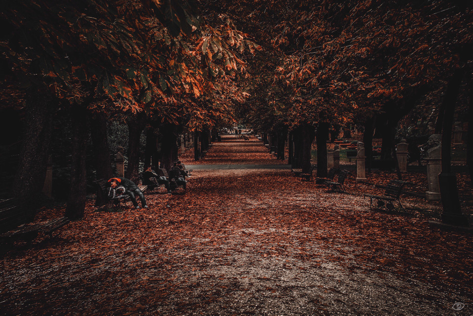 Autumn Blow  #autumn #romeitaly #villaborghese #beautiful #beauty #colorful #people #nature #photography #sky #travel #italy #art #interesting