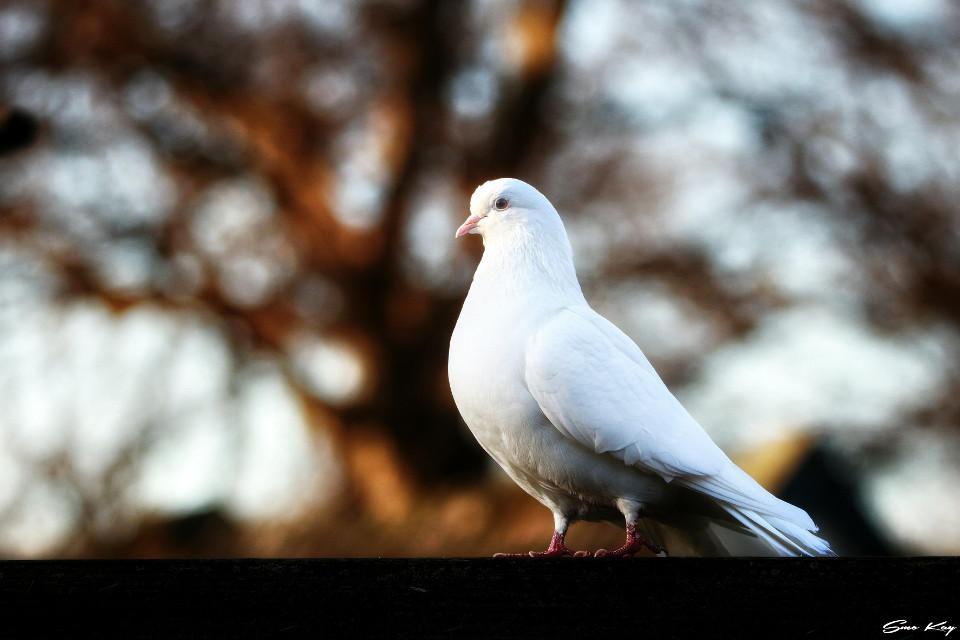 #bird #tierpark #photography #nature #petsandanimals #animals #zoo