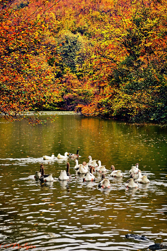 #fallcolors #lake #nature #photography