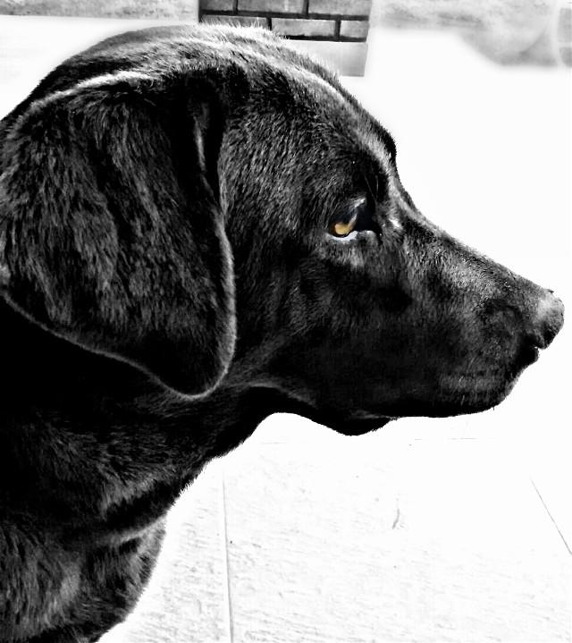 #blackandwhite #freetoedit #cute #petsandanimals #photography #dog  CIRA ❤