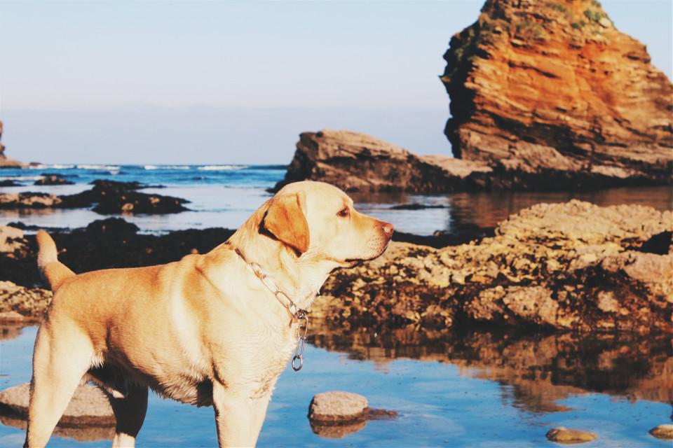 My love.  #petsandanimals #photography #cute #beach #animals #dog #animalslover #canon100D #water #Galicia #landscape #canon