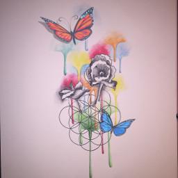art flower flowers poppies butterflies