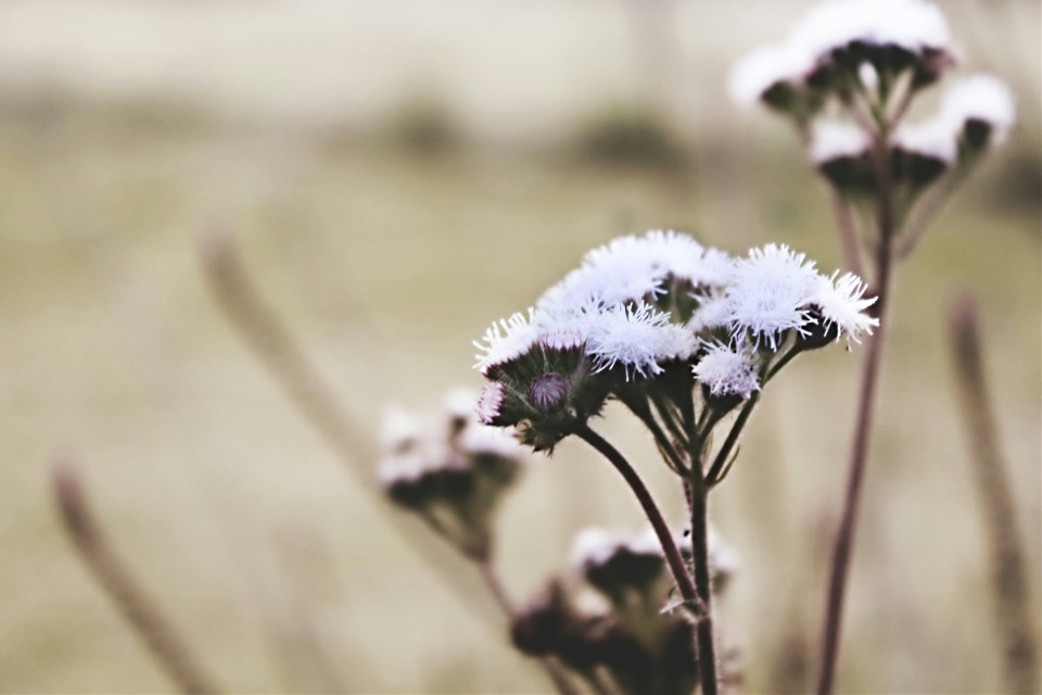 #flower  #nature   #winter  #photography     #canon