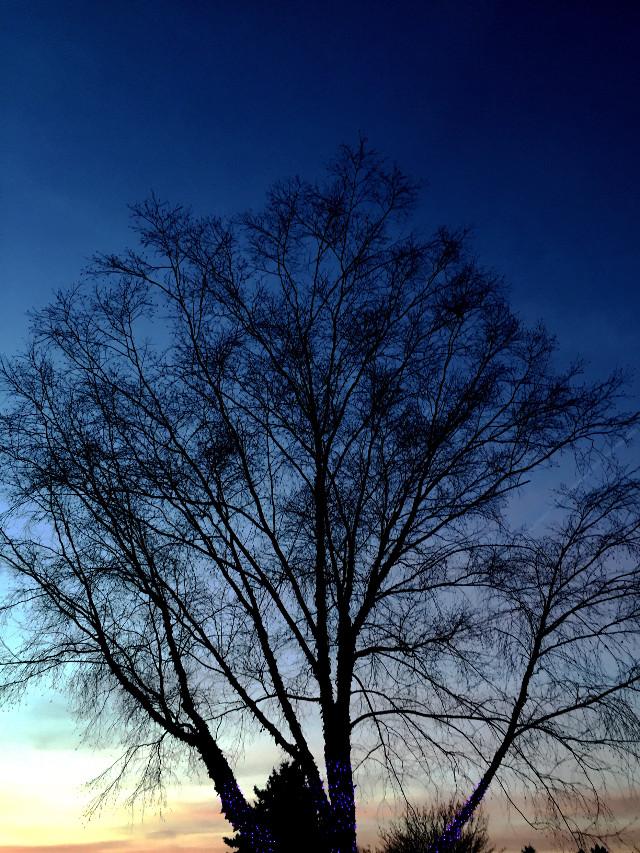 #Tree #sky #sunset #lights