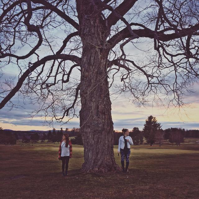 #tree #park #landscape