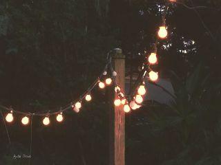 light lightbulbs evening nature vintage