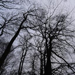 myphoto unedited photography trees sky