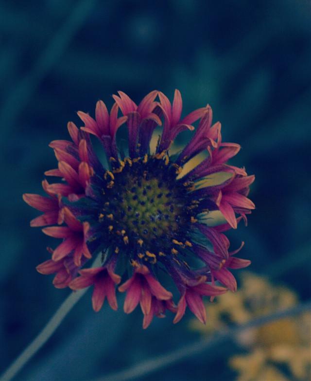 #flower #spring #season  #wppFlowers