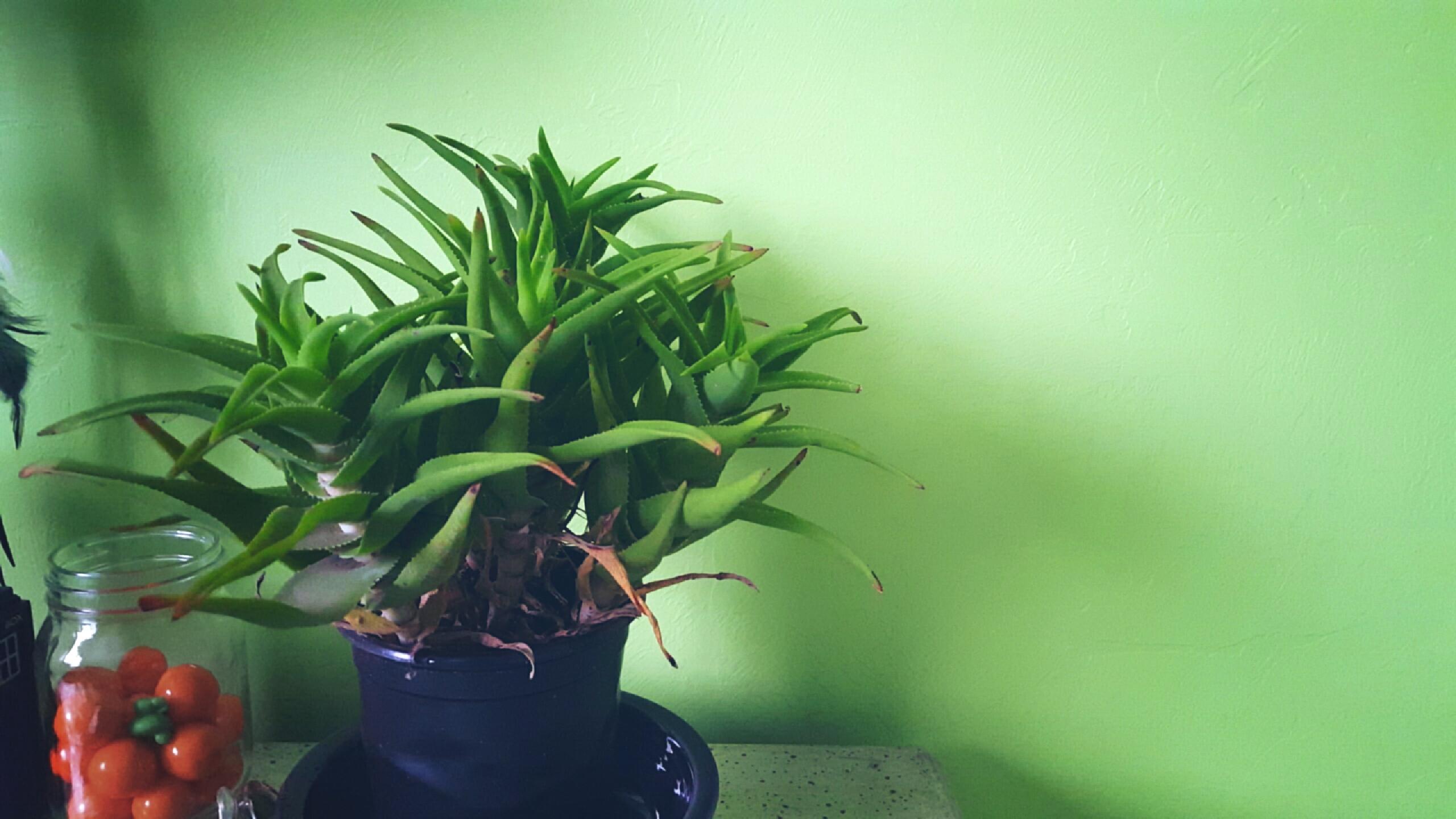 Plant Art Aesthetic Tumblr Image By Jordan Twichie