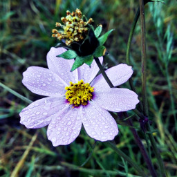 nature flower photography colorful