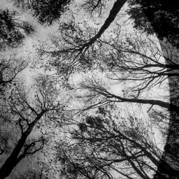 photography freetoedit night moon edited earth blending woods picsart