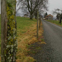 winter nosnow tree cloudy rainy