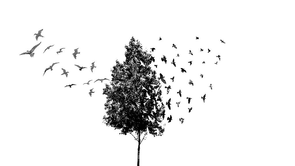 tree bird blackandwhite clipart